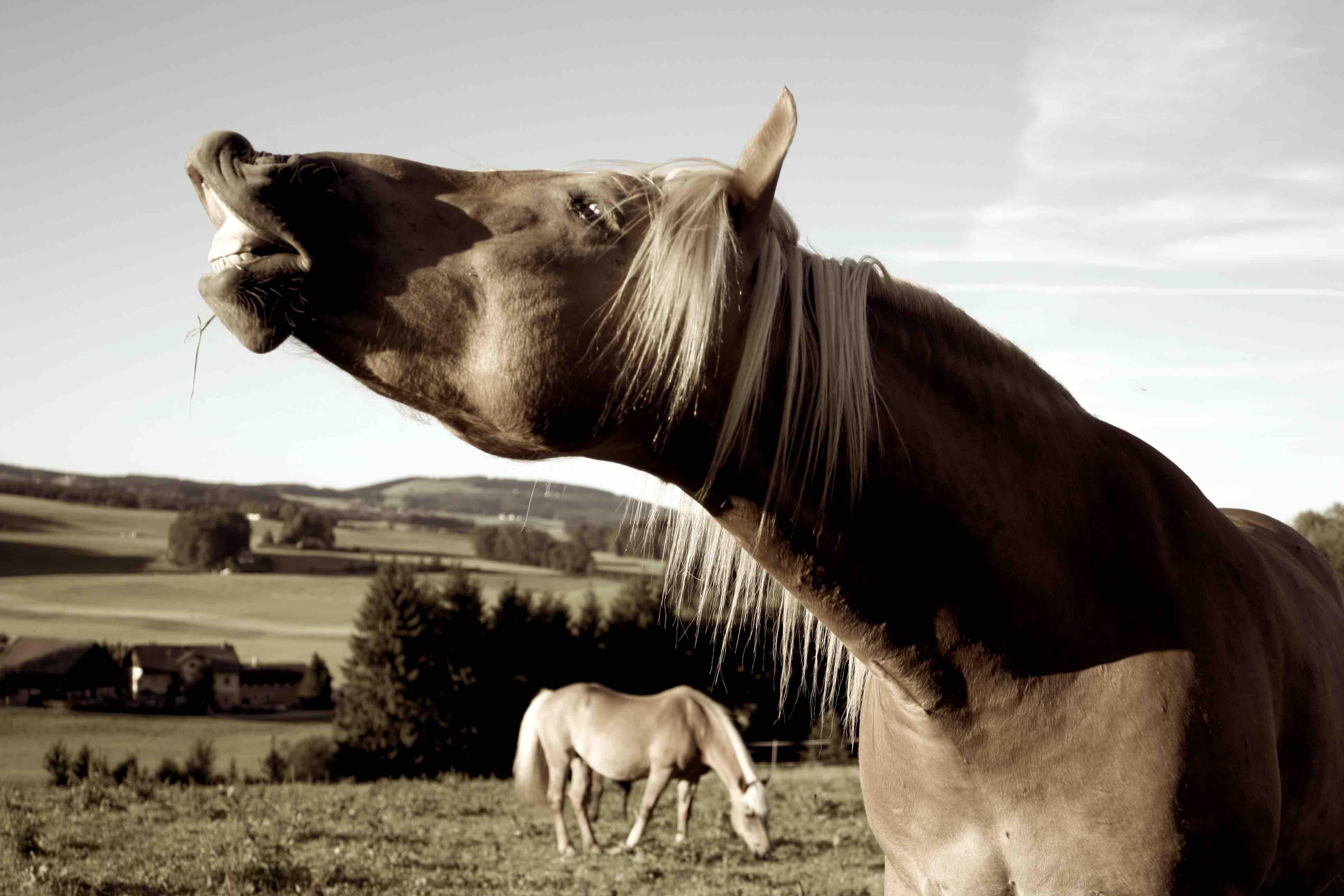 heimtierhilfe_pferd_koppel